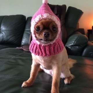 🚚 寵物針織連帽脖圍。毛小孩冬季必備。手作毛線編織