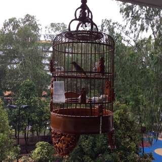Puteh Cage only