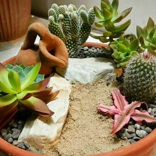 Succulents and Cacti for sale