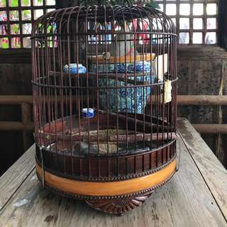 3 finch Vintage cages