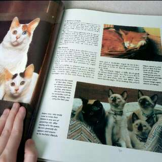 Cat Magazine / A Guidebook to understanding kittens