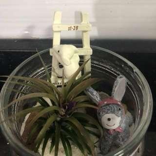 Valentine's Day- Airplant terrarium- zakka