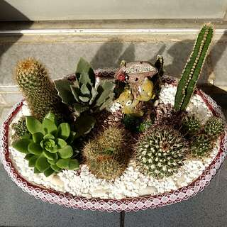 Potted Succulent and Cactus Plants
