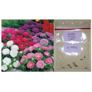 Aster Flower Seeds (Colour Carpet)