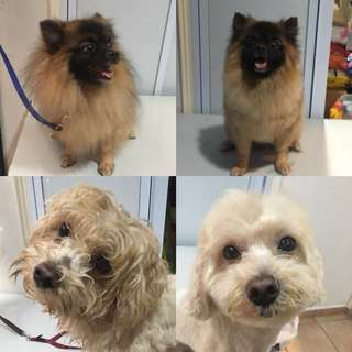 Pet grooming/boarding services