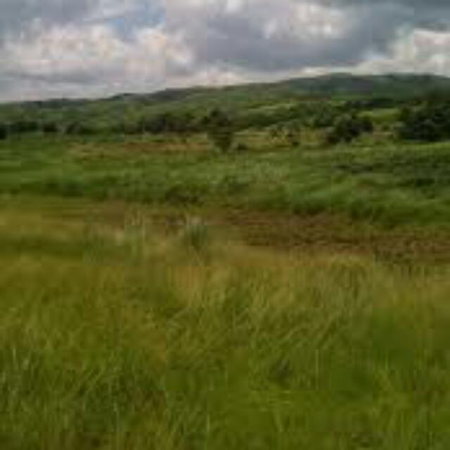 Farmland (Riceland)
