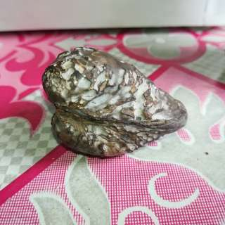 Fosil Siput