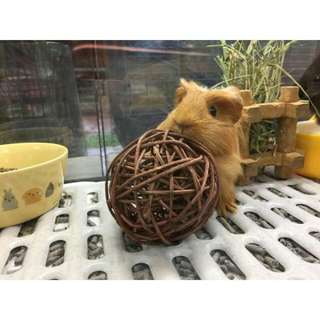 Pets' Gantry-New Stocks Of Willow Balls!