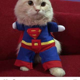 Baju kucing superman JUAL RUGI