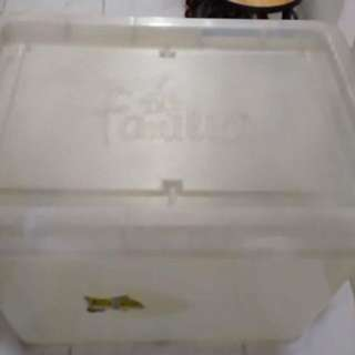 Familia Storage Box