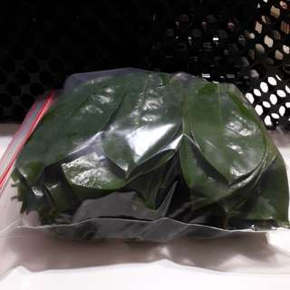 Soursop leave Free Delivery