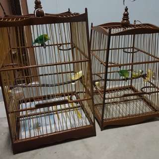Green leaf bird each $280 with cage