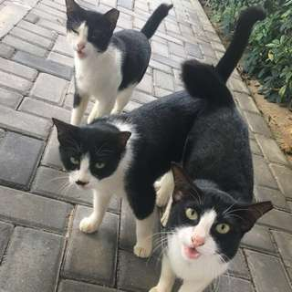 CATS (PLS READ)
