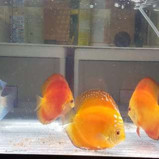 2ft discus tank with stand