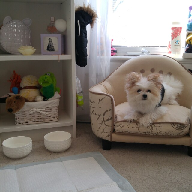 Dog Bed / Couch