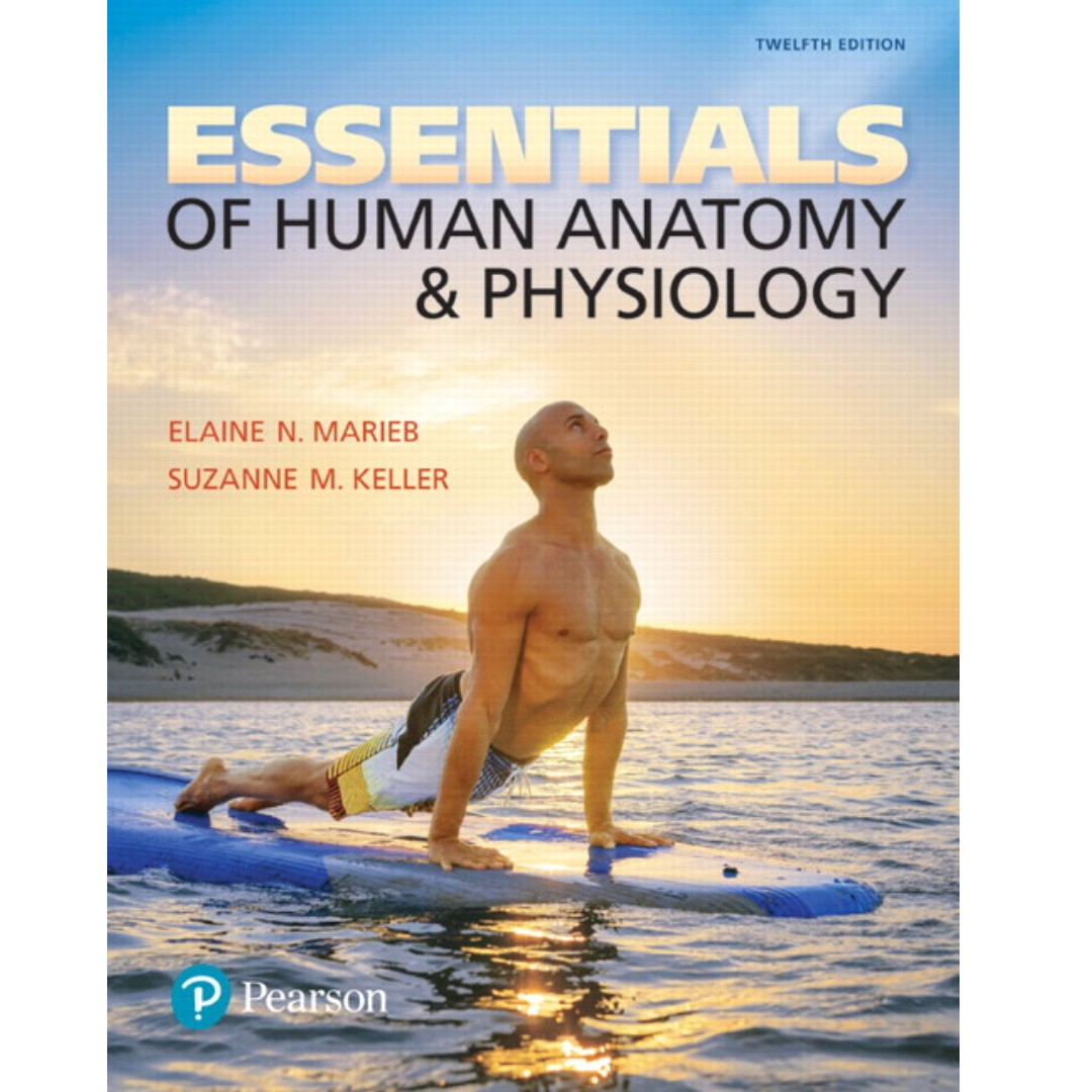 Essentials of Human Anatomy & Physiology 12th Edition, Textbooks on ...
