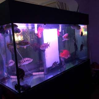 Fish tank with sump tank 5x2x3ft(h) 2mm thick glass