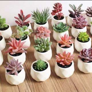 Eternal Potted Succulents