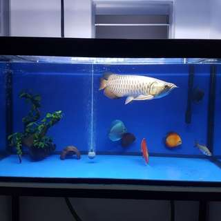 422 ft fish tank with Stand and cover