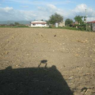 Residential/agricultural land for sale