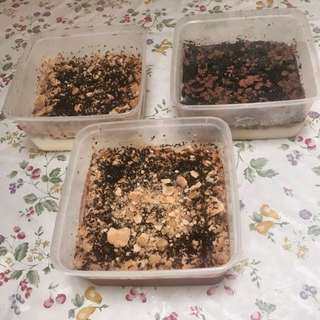 Pudding Regal /Oreo/Coco