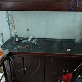 6ft fish tank for free
