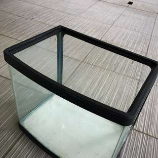 Curved fish tank 12in x 8in x 11in