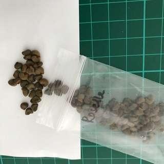 Roselle seeds