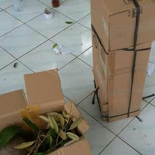 Paket bibit kelapa dan durian