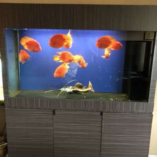 Fish tank for FREE