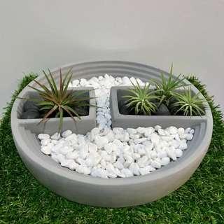 Home Decor Air Plants Table Centepiece