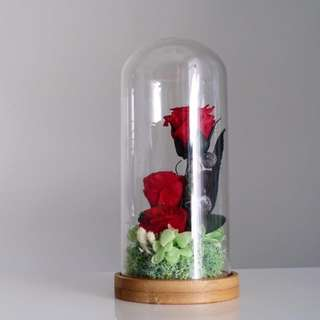 SALE - Preserved Red Roses in Glass Dome
