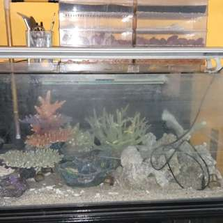 Fish Tank 3ft by 1.5ft