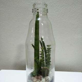 Glass Bottle Cacut