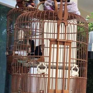 WTT parrot