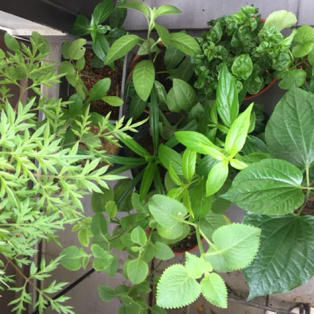 10 herb and edible plants package promo