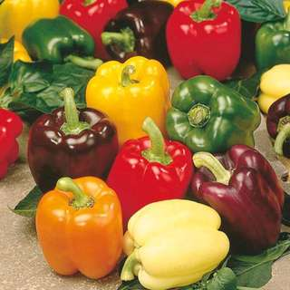 Sweet Rainbow Pepper Mix Colour Seeds