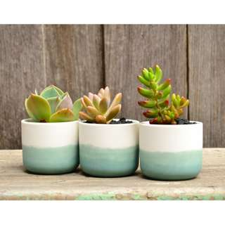 Set of Three Mini White Ceramic Turquoise Ombre Dip Dyed Planters