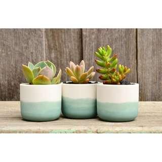 Set of Three Mini White Turquoise Ombre Dip Dyed Planters