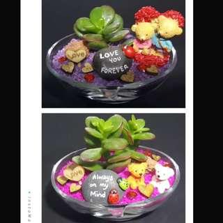 Valentine's day terrarium