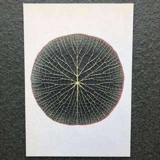 Botanical Postcard