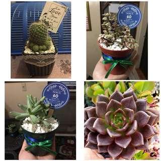 Succulent Souvenirs