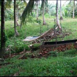 land in ibabang polo pagbilao quezon for sale