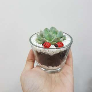 Couple Terrarium #8