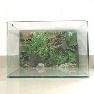 Glass Fish Tank (curved front edges)