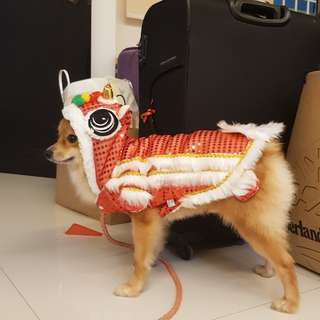 Lion dance costume for CNY