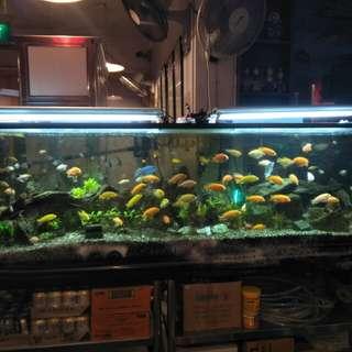 7ft big fish tank