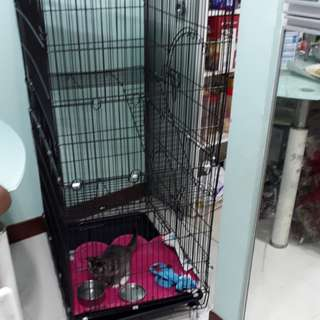 Cat Cage in side kitten smolie cat one month toilet training ready