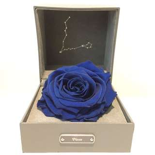 ROSE ONLY ecquador blue rose real flower pisces gift set