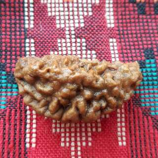 1 Face Rudraksha NEPAL (GENUINE AND AUTHENTIC)